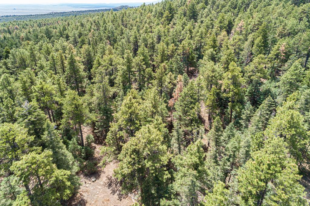 MLS# 185752 - 11 - 11010 Bartlett Trail , Rye, CO 81069