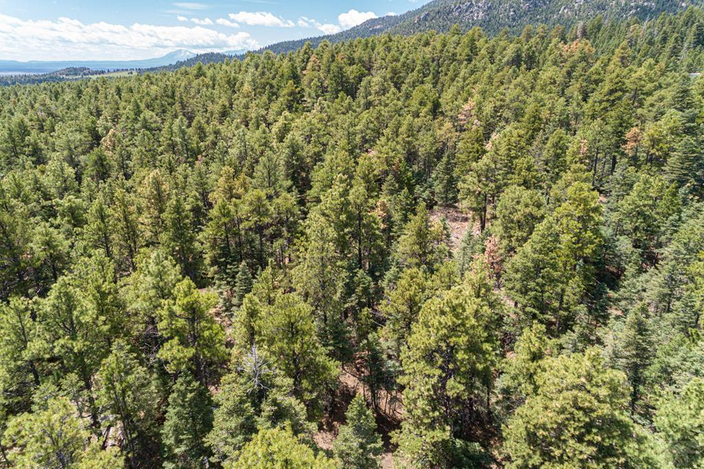 MLS# 185752 - 14 - 11010 Bartlett Trail , Rye, CO 81069