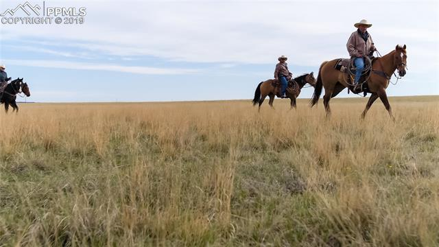MLS# 9639998 - 3 - 7021 Buckskin Ranch View, Peyton, CO 80831