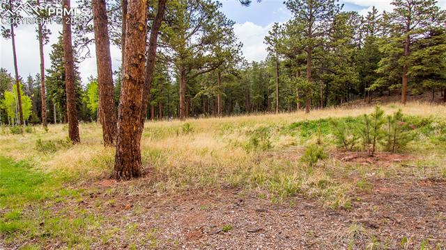 MLS# 8254690 - 6 - 1215 Cottontail Trail, Woodland Park, CO 80863