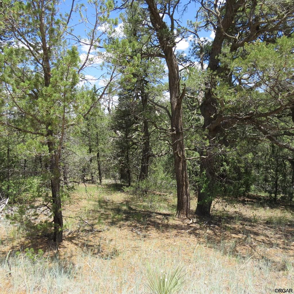 MLS# 61103 - 11 - TBD Holmes Road  #Lot 5, Cotopaxi, CO 81223