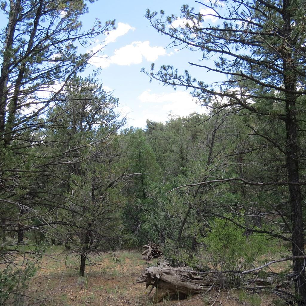 MLS# 61104 - 4 - TBD 4&5 Holmes Road  #LOT4&5, Cotopaxi, CO 81223